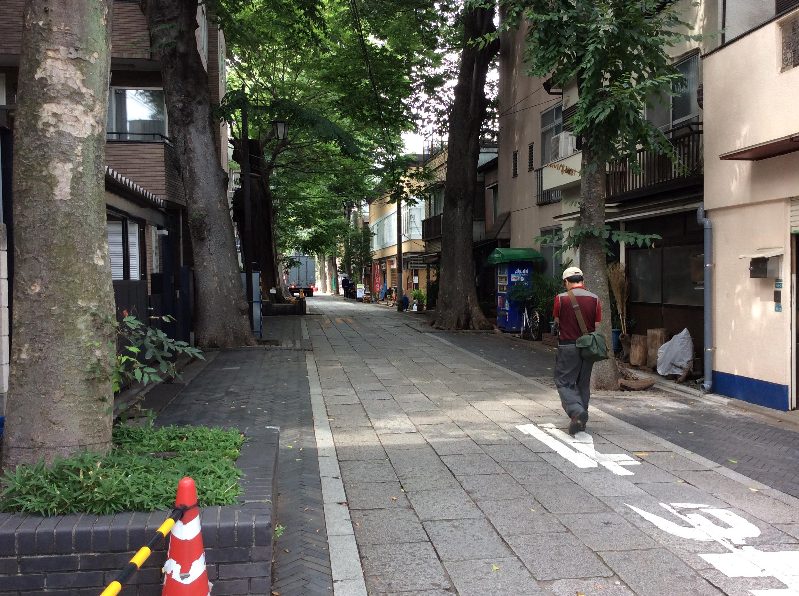 雑司ヶ谷の大門ケヤキ並木道